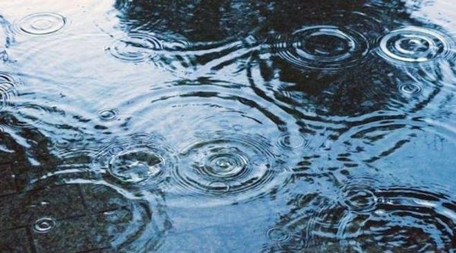 雨降りサボテン